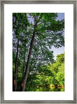 Emerald Afternoon Framed Print