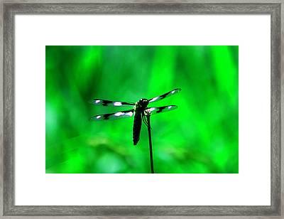 Emerald Dragon Fly Framed Print