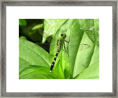 Framed Print featuring the photograph Emerald Dragonfly by David Dunham