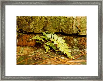 Emerald Dream Framed Print by Jan Amiss Photography