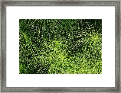 Emerald Explosion Framed Print by Winston Rockwell