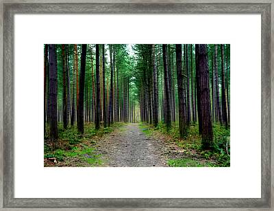 Emerald Forest Framed Print by Svetlana Sewell