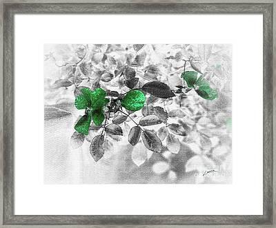 Emerald Green Of Ireland Framed Print