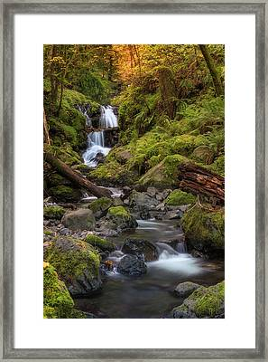 Emerald In Autumn Framed Print