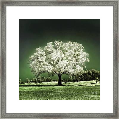 Emerald Meadow Square Framed Print by Hugo Cruz