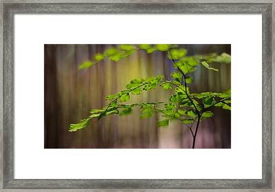 Framed Print featuring the photograph Emerald by Tim Nichols