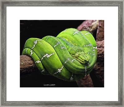 Emerald Tree Snake Framed Print