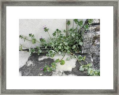 Emergence Framed Print by Kim Nelson