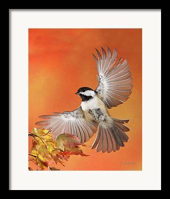 Songbirds In Flight Framed Prints