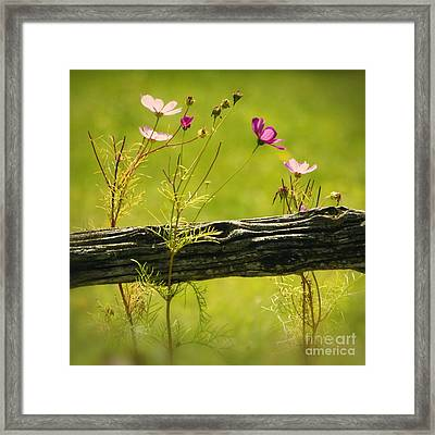 Emerging Beauties - 01-rgnl-sq Framed Print