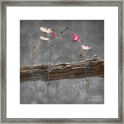 Emerging Beauties - V38at1 Framed Print
