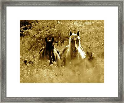 Emerging From The Farm Framed Print