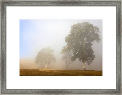 Emerging From The Fog Framed Print by Mike  Dawson