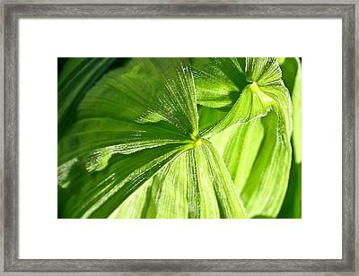 Emerging Plants Framed Print by Douglas Barnett