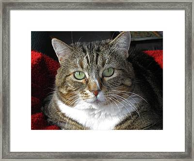 Emily Framed Print by Tammy Sutherland