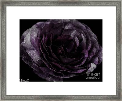 Emily's Great Ant Thingy Flower..... Framed Print