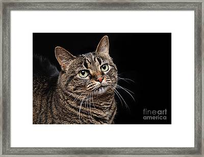 Emmy The Cat Ponder Framed Print