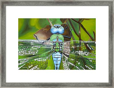 Emperor Dragonfly Framed Print by Bryan Ory