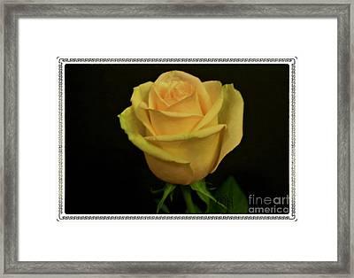 Framed Print featuring the photograph Empress Rose by Marsha Heiken