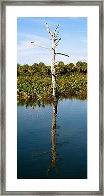 Empty Branches Framed Print by Fanny Diaz