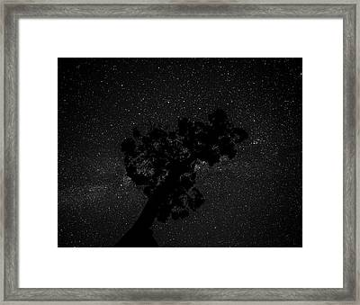 Framed Print featuring the photograph Empty Night Tree by T Brian Jones