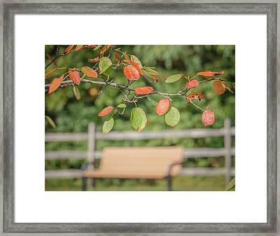 Empty Park Bench On A Cool Autumn Morning Framed Print by Rick Grossman