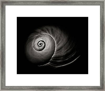 Empty Shell Framed Print