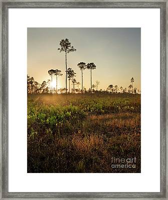 Empty Skies Over Picayune Strand Framed Print by Matt Tilghman