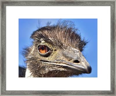 Emu Eye I Framed Print