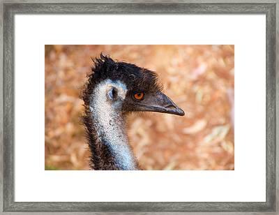 Emu Profile Framed Print by Mike  Dawson