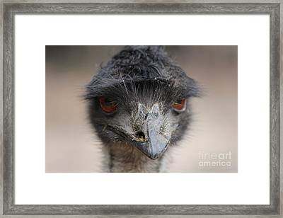 Emu Framed Print by Roo Printz