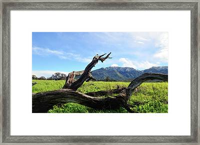Emulating The Past Framed Print by Donna Blackhall