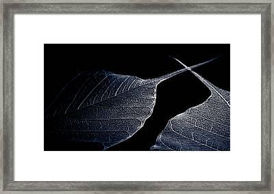 En Garde Framed Print by Maggie Terlecki