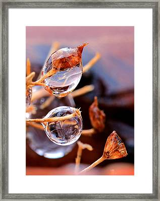 Encapsulated By Ice Framed Print by Christopher McKenzie