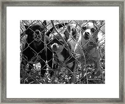 Encarcelados Chihuahuas Framed Print by DigiArt Diaries by Vicky B Fuller