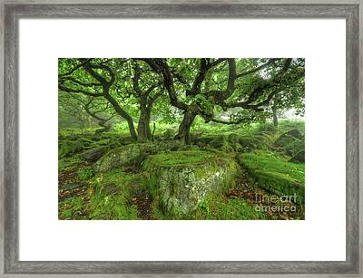 Enchanted 1.0 Framed Print