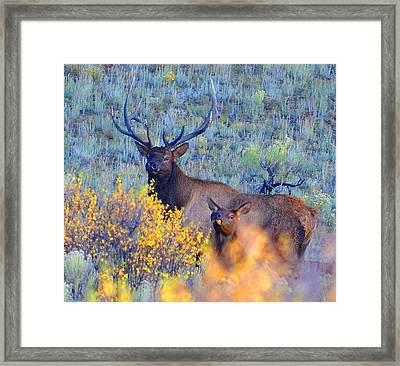Enchanted Circle Elk Red River New Mexico Framed Print by Charles Frieda