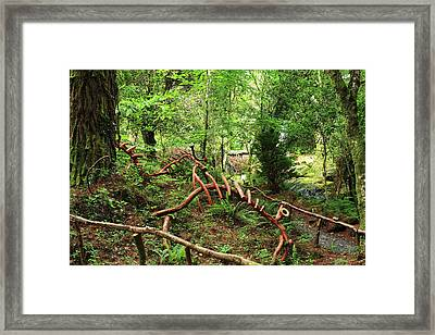 Framed Print featuring the photograph Enchanted Forest by Aidan Moran