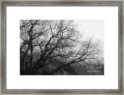 Framed Print featuring the photograph Enchanted Forest by Ana V Ramirez