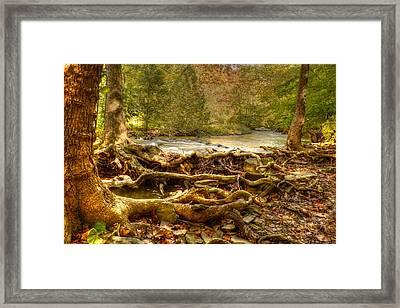 Enchanted Forest Framed Print by Ann Bridges