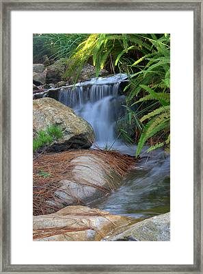 Enchanted Forest Framed Print by Brad Scott