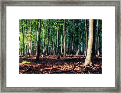 Framed Print featuring the photograph Enchanted Forest by Dmytro Korol