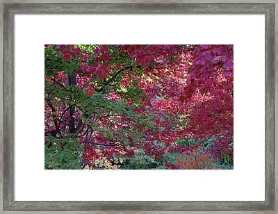 Enchanted Forest Framed Print by Doris Potter