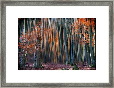 Enchanted Forest Framed Print by Em-photographies