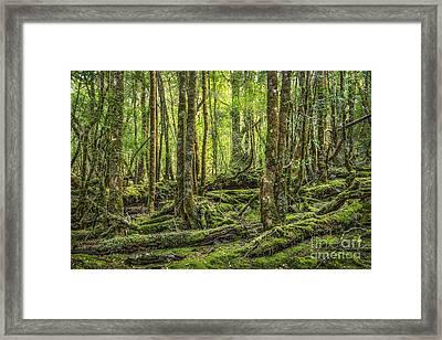 Enchanted Forest Framed Print by Evelina Kremsdorf
