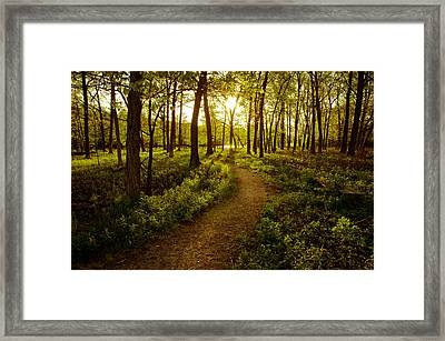 Enchanted Forest Framed Print by Jason Naudi Photography