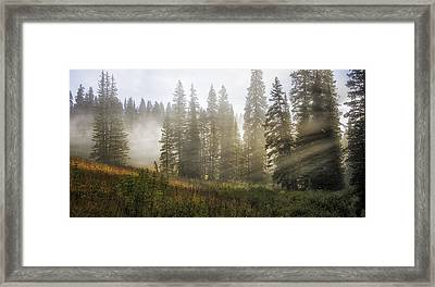 Enchanted Forest Of Kebler Pass  Framed Print