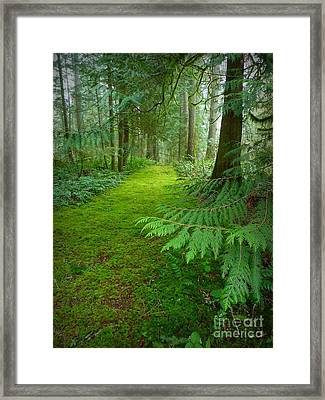 Enchanted Forest Framed Print by Patricia Strand