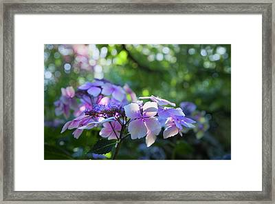 Enchanted Hydrangea Framed Print by Theresa Tahara