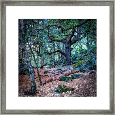 Enchanted Framed Print by Jerry Golab